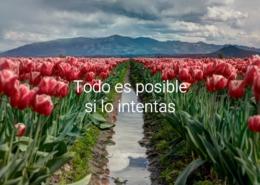 Alles is mogelijk